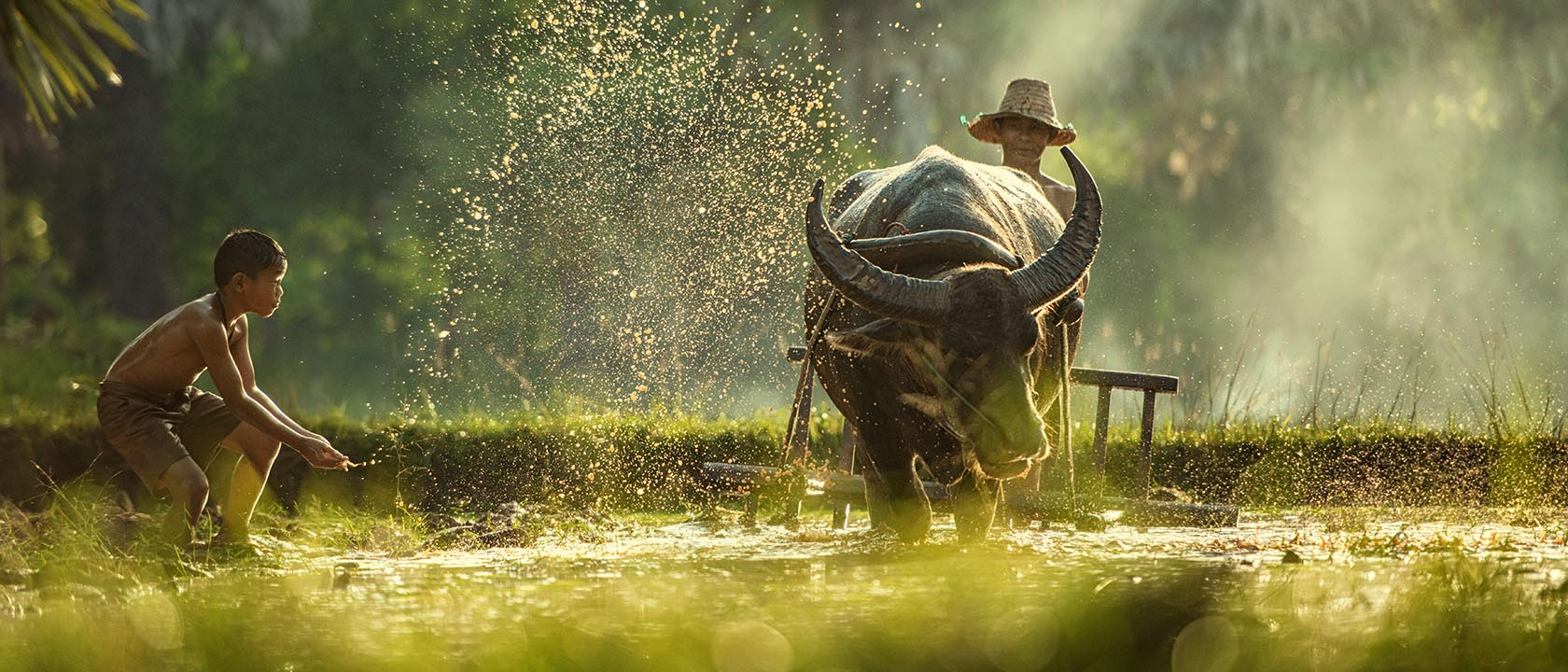 SWanonniwat Farmer