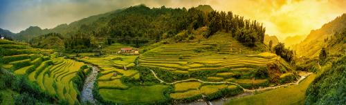 Rice fields on terraced in sunset at SAPA, Lao Cai, Vietnam. Ric