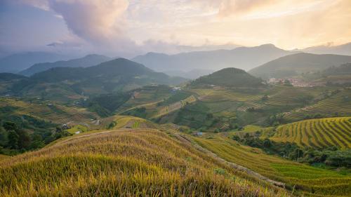 Rice fields on terrace in rainy season at Mu Cang Chai, Yen Bai,