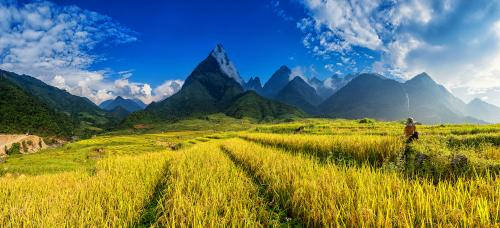Beautiful Rice field The summit beautiful landscape of Fan Si Pa